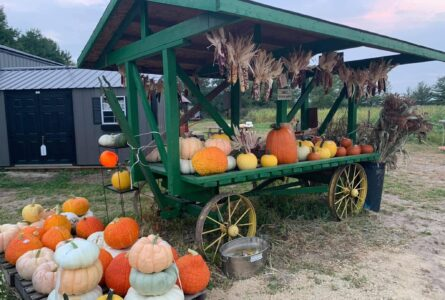 PHOTO SUBMITTED The Independent-Register Pumpkin displays at Raupp's Pumpkin Patch are beautiful, including this one showcasing pumpkins of all sizes as well as other available decorations.